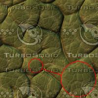 toad-skin-01.jpg