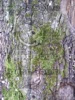 tree bark_01.jpg