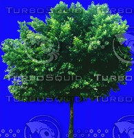 tree019.jpg