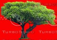 tree097.jpg