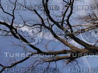 wood0129.jpg