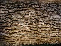 wood0209.jpg
