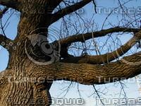 wood0219.jpg