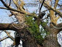 wood0232.jpg