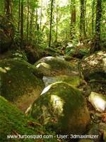 Australia forest 003.jpg