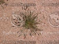 Desert Weed 03