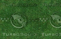 JTX_grass07.jpg