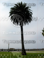 Palm Tree 01.JPG