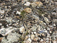 Rocky Ground Closeup.JPG