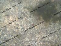 Sea Saltwater
