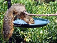 Squirrel 12.jpg