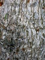 Tree bark 0086.JPG
