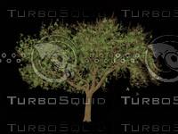 Tree.psd