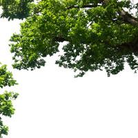 branch5