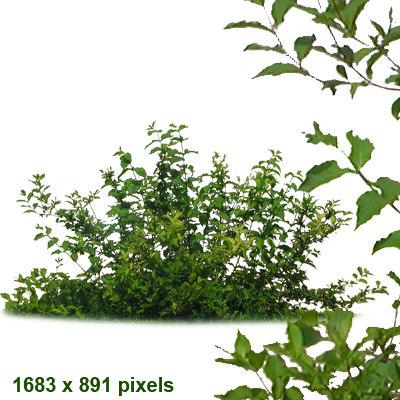 bush6.jpg