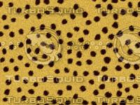 Cheetah Fur Texture