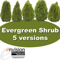 Evergreen Shrub Textures