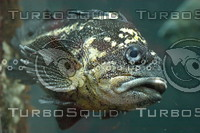 Fish eye