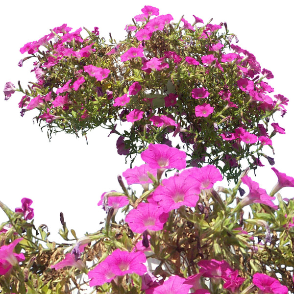 flowers1p.jpg