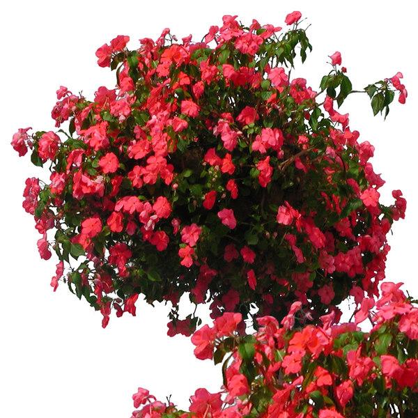 flowers3p.jpg