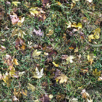 Grass With Leaves 2