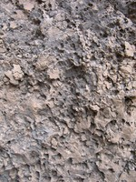 Rock Texture - Limestone 1