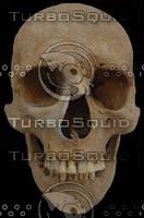 skull24.jpg