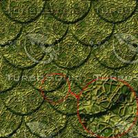 snake-scales02.jpg