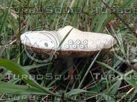 stock_photo_mushroom_bySentidos.JPG