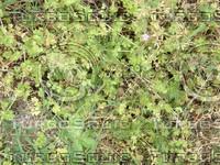 texture_grass.jpg