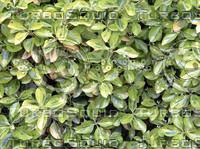 texture_leaves2.jpg