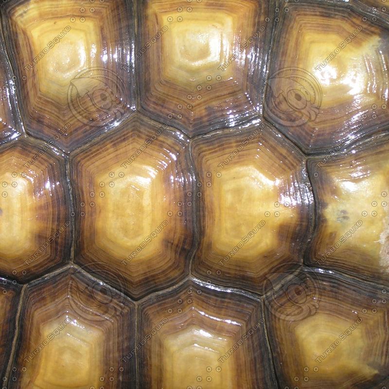 Texture jpg tortoise shell turtle