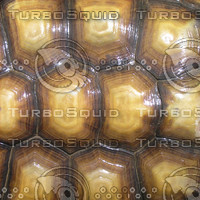 tortoise shell.jpg