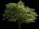 tree099.jpg