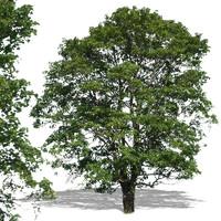 tree22