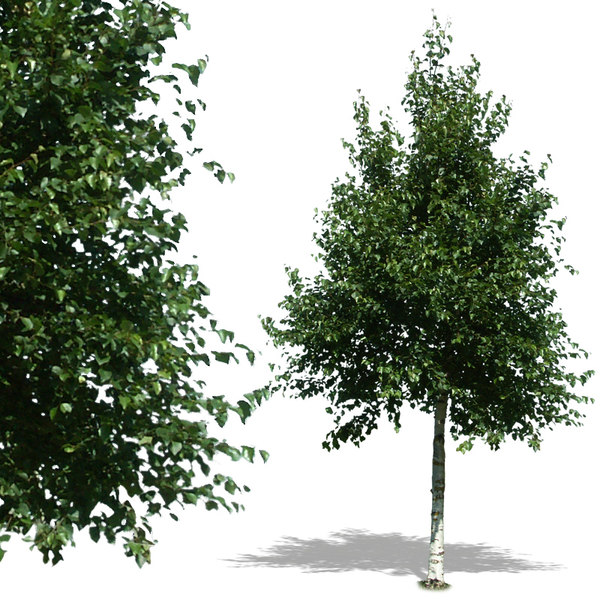 tree25p.jpg