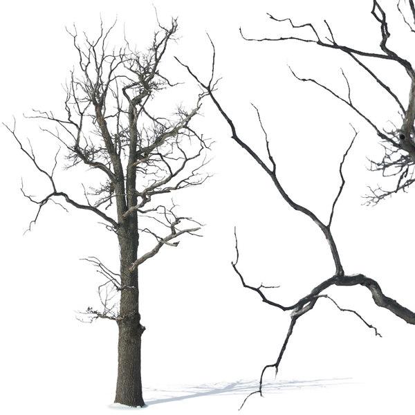 tree29p.jpg