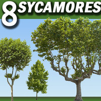 8 Planetree / Sycamores / Platanus Collection High Resolution.zip