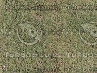 Grass03