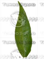 Leaf 04