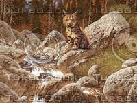 Bobcat / AF-015