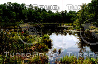 Beautiful_marsh_land.jpg