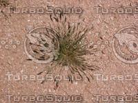 Desert Weed 02
