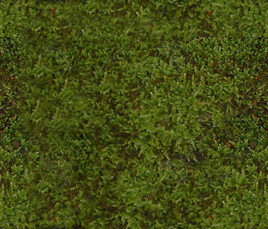 Damp_moss.jpg