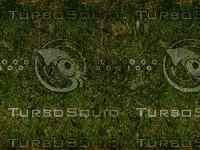 Dark_grass.jpg