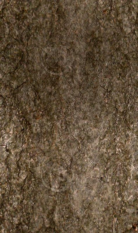Dark_tree_bark.jpg