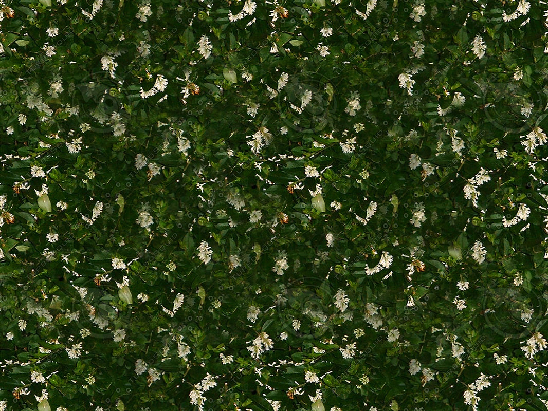 Flower_cover.jpg