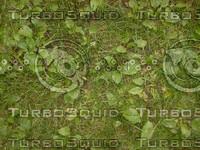 Grass_weed.jpg
