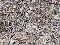 Small driftwood 933.JPG