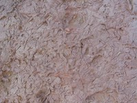 Rock Texture - Biotrabation 2